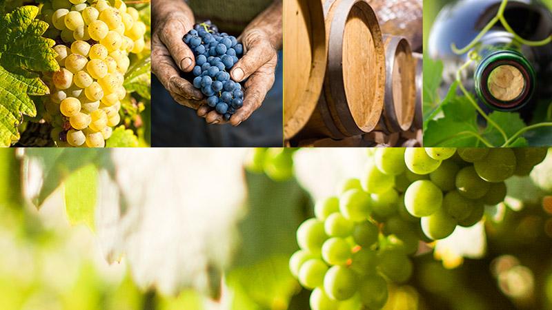 Vin biologique - Vignerons Indépendants