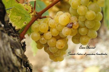 Carton Panaché des Vins du Domaine de Magord :Pack  Soleil & Sourires...